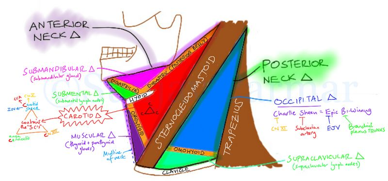 Neck triangles and contents mnemonics