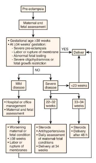 algorithm pre-eclampsia