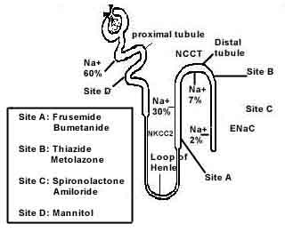 diuretics mechanism
