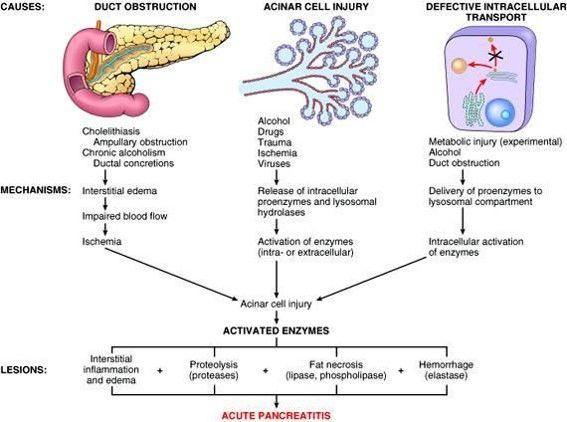 acute pancreatitis pathophysiology