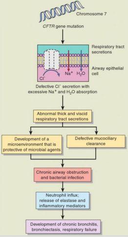 cystic fibrosis pathogenesis
