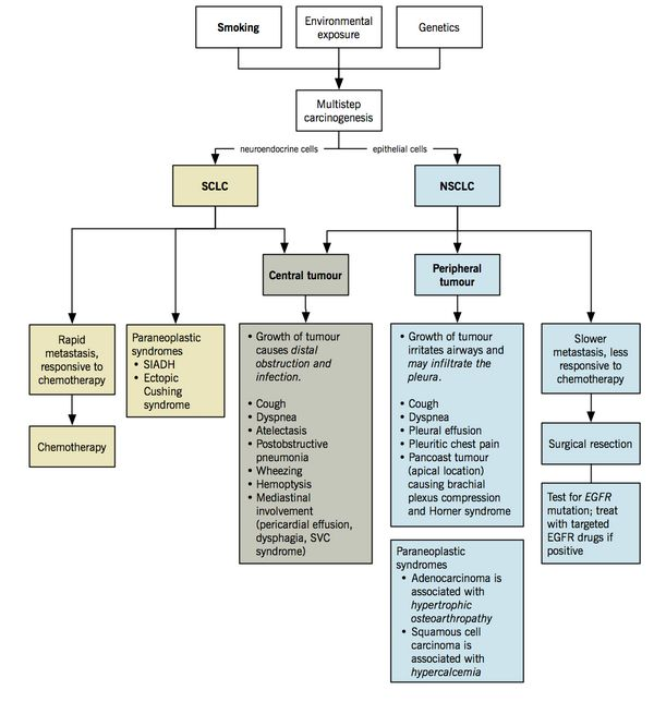 lung cancer pathophysiology