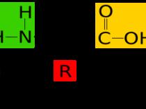 Amino Acids Mnemonics
