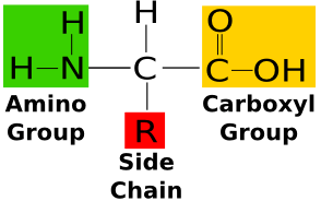 amino acid structure
