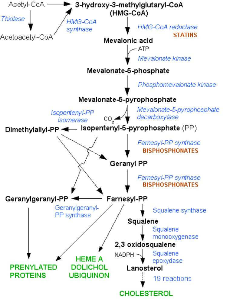 biosynthesis of steroids pathway