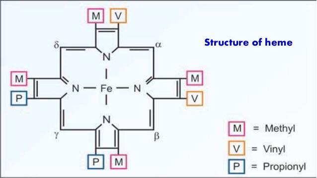 heme structure