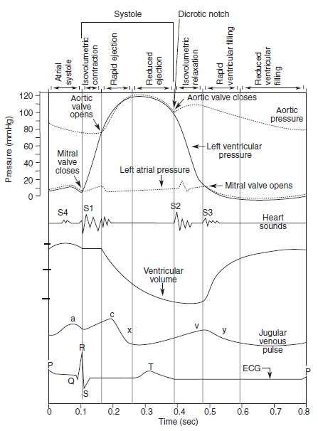Cardiac Cycle - Summary and Wigger's Diagram | Epomedicine