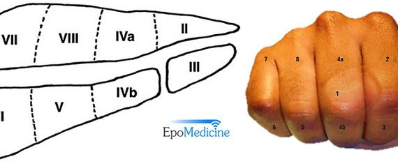 Liver Segments Explained with Mnemonic