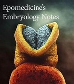 embryology notes