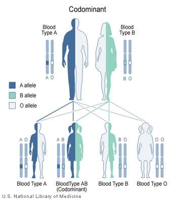 bloedgroep kinderen