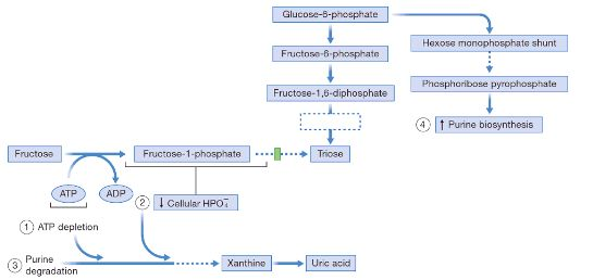 fructose hyperuricemia