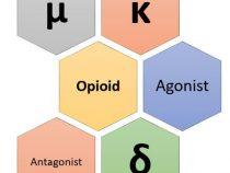 Opioid Receptors Mnemonic