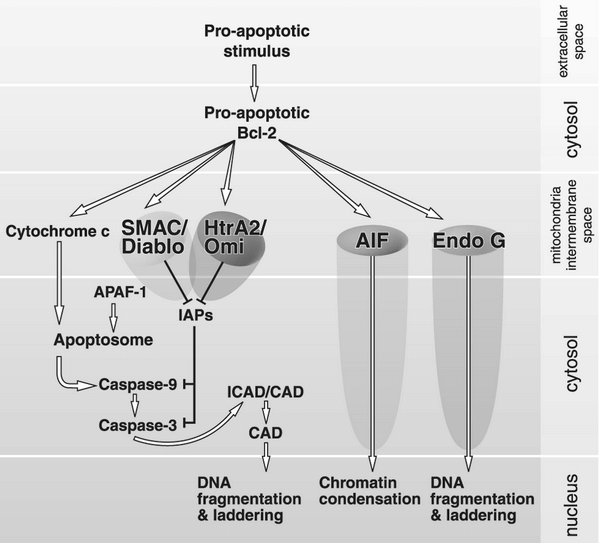 Proapoptotic and Antiapoptotic