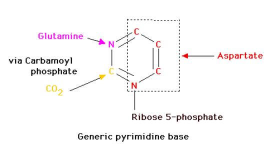 pyrimidine base