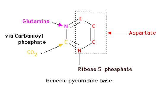pyrimidine base