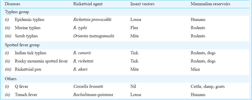 rickettsial disease