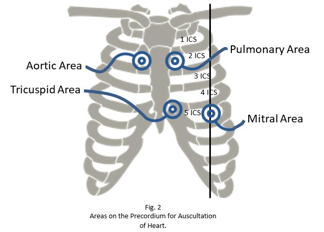 heart sounds area