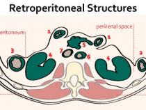 Retroperitoneal Organs : Mnemonic