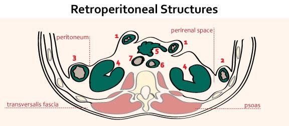 retroperitoneal-structures