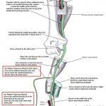 ulnar nerve course
