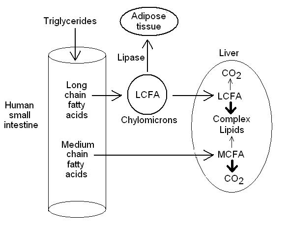 Fatty Acid absorption