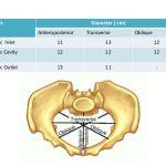 pelvic dimensions