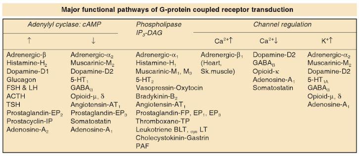 receptor mechanism