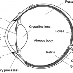 eye schematic