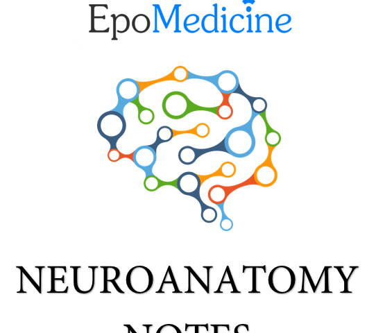 Free neuroanatomy notes