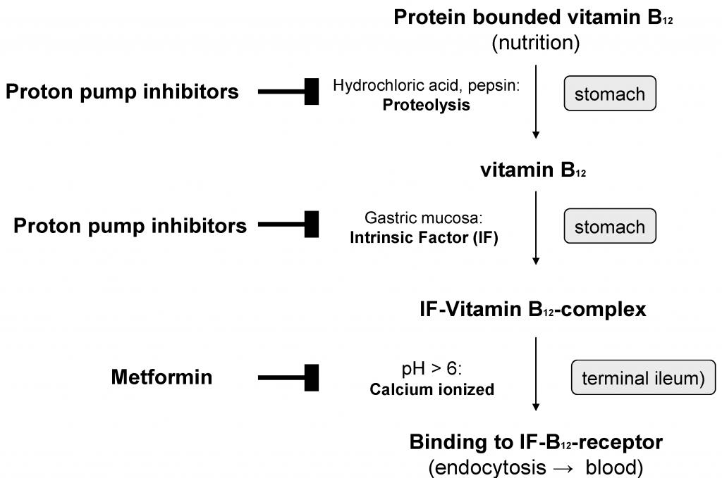 vitamin b12, ppi, metformin