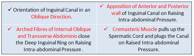 natural mechanisms preventing hernia