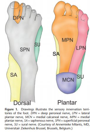 foot nerve supply